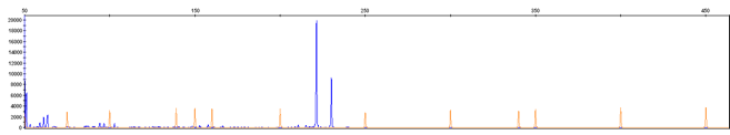Fragment Analysis Chromatogram Image